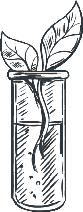 A pencil drawn two leafed plant is dangling in a beaker.